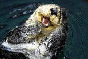 9914852-close-up-shot-of-a-sea-otter-enhydra-lutris